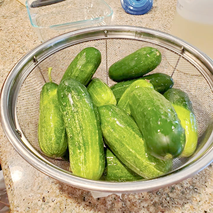 """Kirby cucumbers in a mesh strainer ready to be turned into refrigerator pickles from the That Homeschool Family article """"Kids in the Kitchen: How to Make Refrigerator Pickles"""" written by Elizabeth Dukart"""